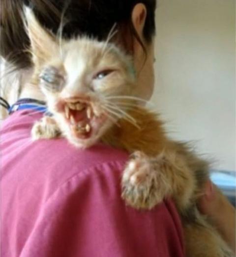 Этот крошечный котенок в так…