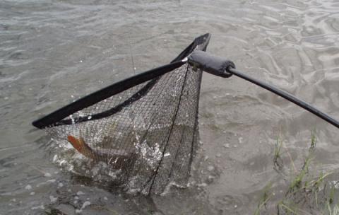 Удачная рыбалка стала неудачной...