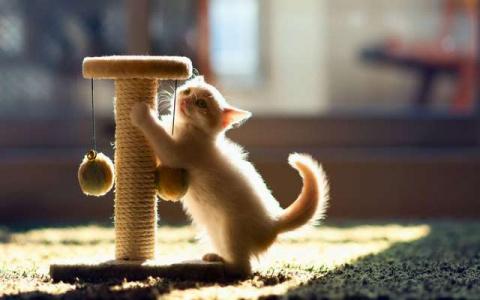 Если кошка точит когти...