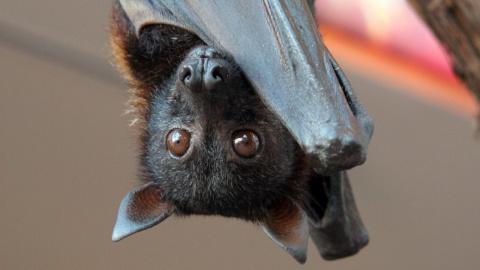 Летучие мыши – наши крылатые помощники. Как привлечь их на свой участок