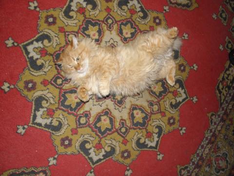 История кота, спасенного в декабрьский дождь