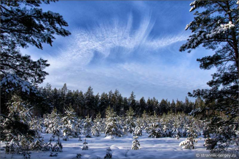 Мир загадочных лесов