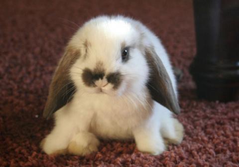 Домашний кролик спас хозяев …