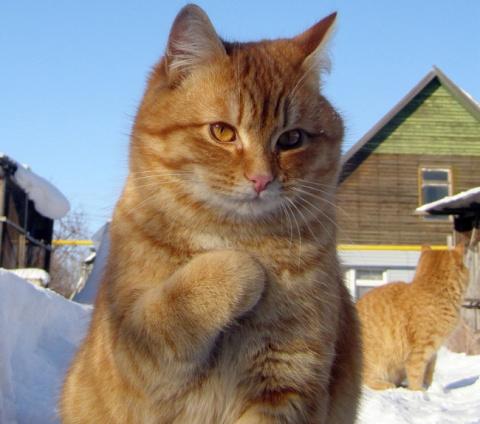 17 фотографий котов, сделанн…