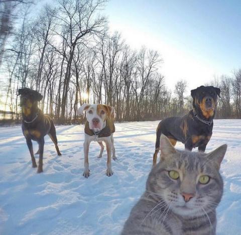 История Сэлфи-кота и его Бригады