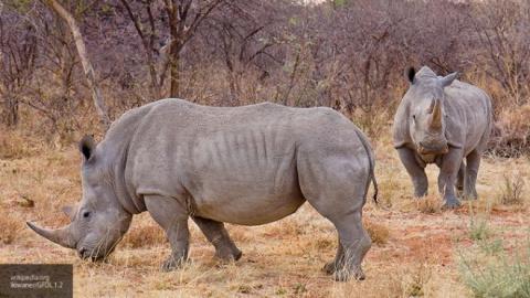 Ученые назвали животных, которые вымирают уже миллион лет