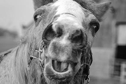 Умерла самая старая в мире лошадь