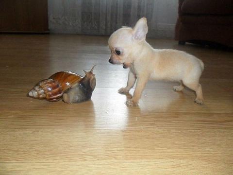 Эти милые и смешные животные