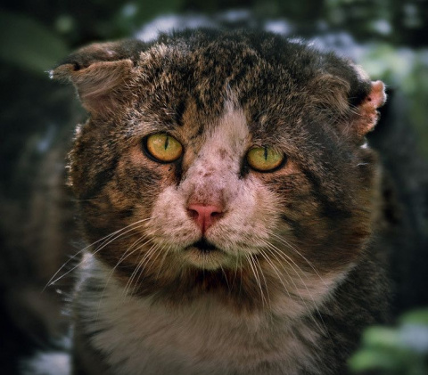Кот воин