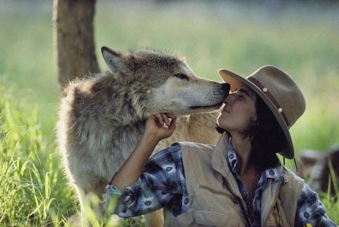 6 лет в палатке посреди леса с волками