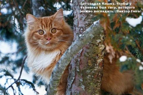 О кошках любимых замолвлю я слово...