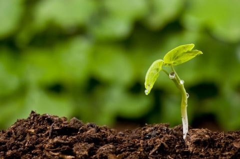Уникальные способы проверки почвы