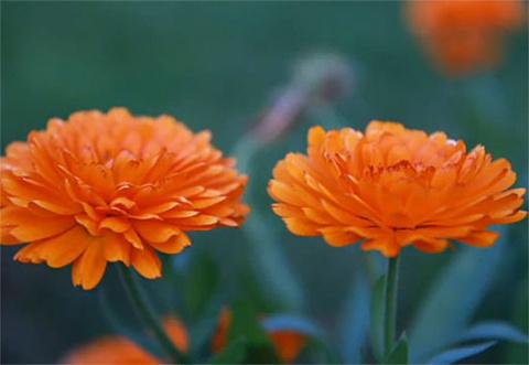 Оранжевый для здоровья