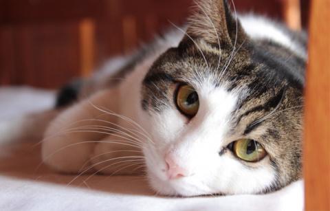 Мама-кошка устроила скандал …