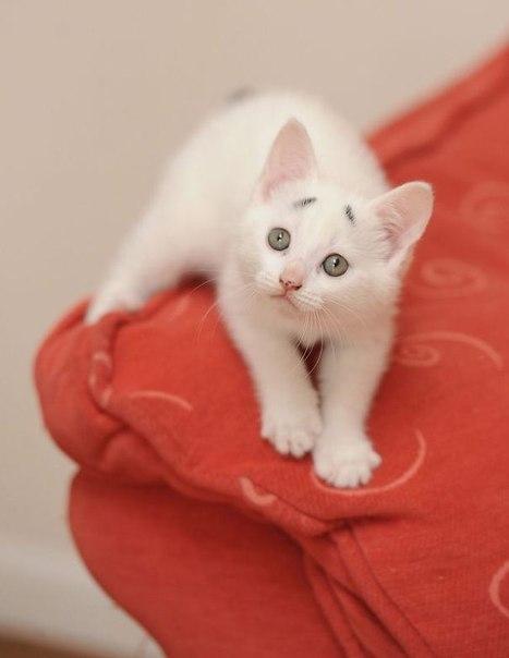 8-недельный котенок Гэри — новая сенсация на просторах сети Интернет