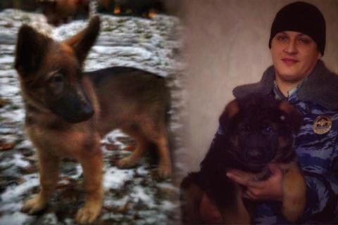 Жителей Франции растрогал российский подарок — щенок Добрыня