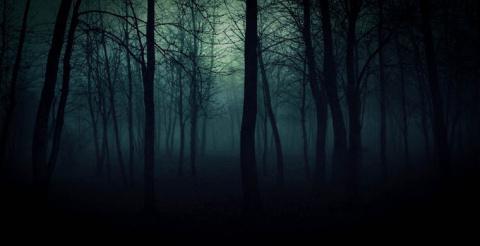 Семь самых страшных лесов планеты