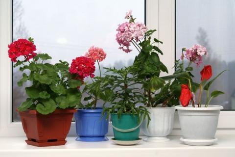 Выбираем растения по сторонам света
