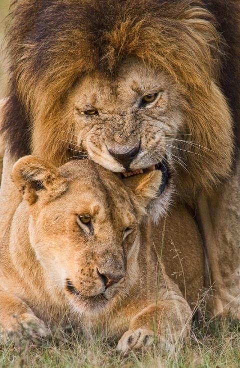 10 талантливых фотографов дикой природы