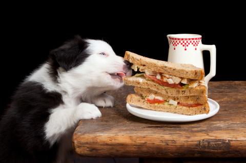 Собачьи поцелуи или как видит мир Ваш любимец