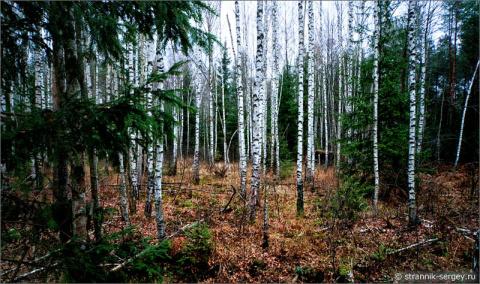 Деревья в сказочном осеннем лесу