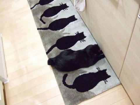 10 котов, знающих толк в маскировке