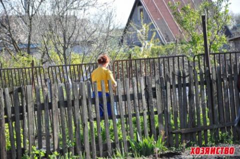 Бабушкины советы по применению золы в саду-огороде