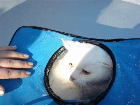 В Екатеринбурге спасли кота выброшенного в реку!!!!!