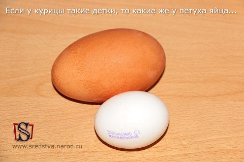 двухжелтковые яйца, двухжелтковое яйцо, трехжелтковые яйца, огромное куриное яйцо, куриное яйцо фото, курица снесла огромное яйцо, большое яйцо