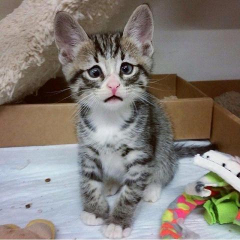 Бум — котёнок, родившийся с …