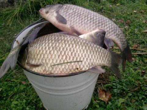 Если б не зловредная соседка, я так бы и не узнала, что муж делает на рыбалке.