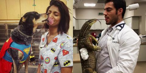 17 преимуществ работы ветеринара