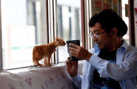 В Поднебесной запустили поезд с кошками