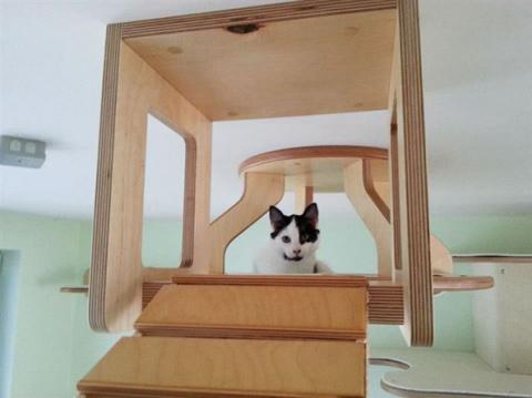 Просторный кошкин дом