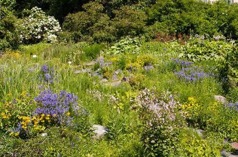 Без хлопот. Как создать красивый сад, который не нуждается в сложном уходе