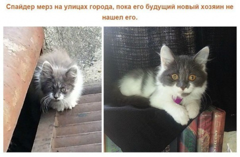 Спасенные кошки, которых под…