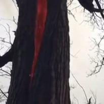 «Дерево дьявола»: В Огайо пу…
