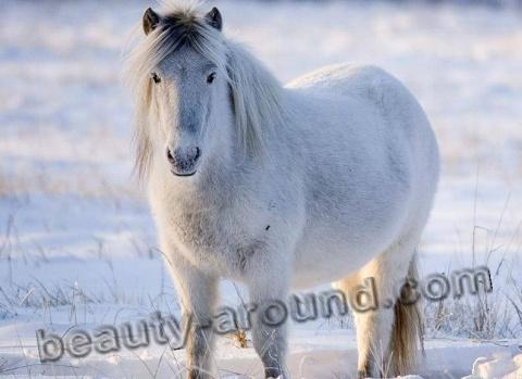 ТЕРЕМОК. Самые красивые породы лошадей