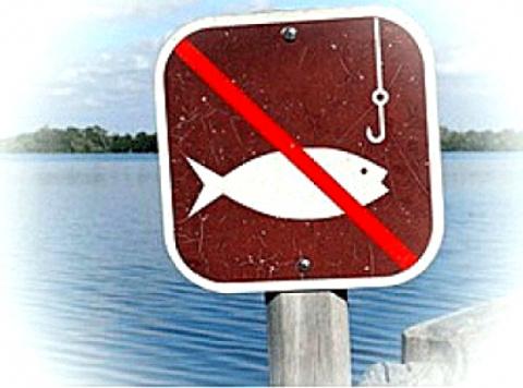 Открыта горячая линия по приему сообщений о незаконной добыче и реализации рыбы в период нереста