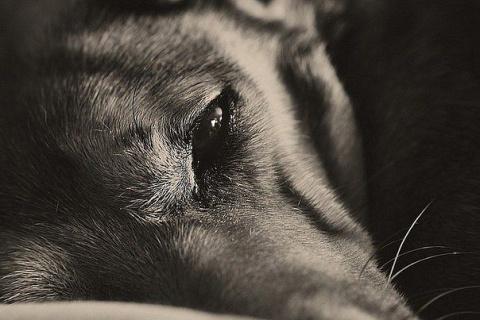 Собака нашла дом после 14000 отказов.
