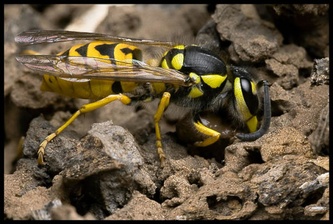 Караул! Неправильные пчёлы!