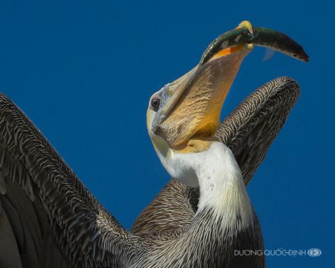 Удивительные кадры животного мира