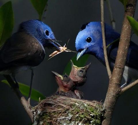 Красивые фотографии птиц (40 фото)