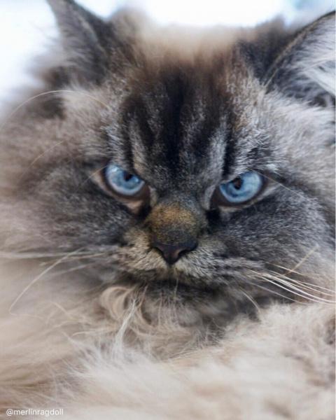 Самый сердитый котик-2017!