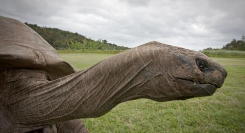 182-летняя черепаха по имени Джонатан