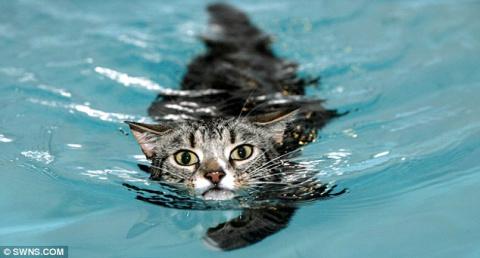 Невезучий парализованный кот…