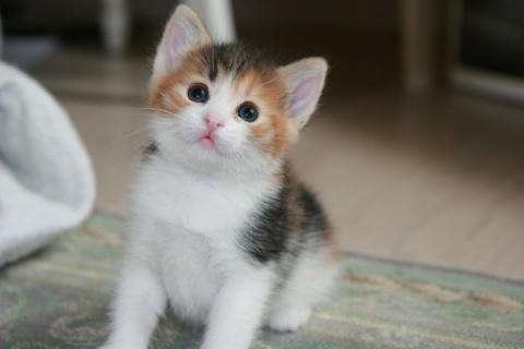 Щенок и котенок - 2 забавных видео