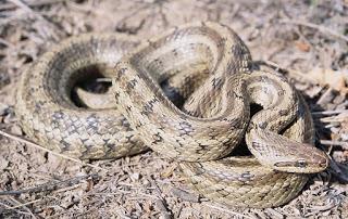 Змеи. Развенчание мифов