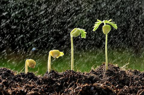 5 вариантов стратификации семян цветов