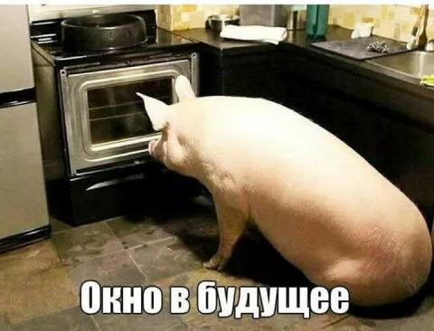 Украинские ученые подсчитали…